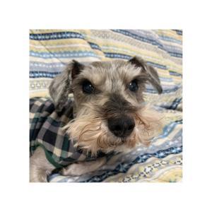 アモ日記 NO.454・・・狂犬病の予防接種を延期