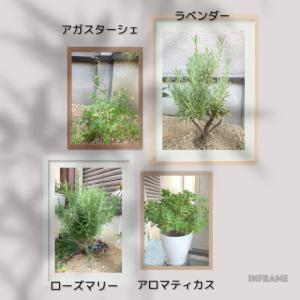 香りも楽しめる植物