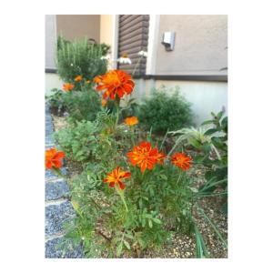 秋へと向かい勢いを増すお花達