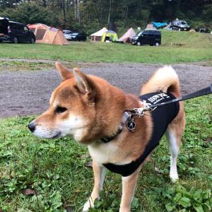 星の降る森-2と、世界の名犬牧場でランランラン♪