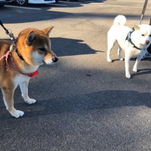 『令和日本犬博 2019』-お友達編