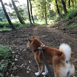 憧れの「つくば犬たちの森」キャンプ-3