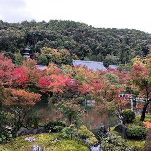 紅葉の季節♫