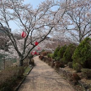 ソロツー 桜と団子を求めて