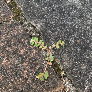 ヨガのレッスン 〜 ブロックの隙間の雑草取り