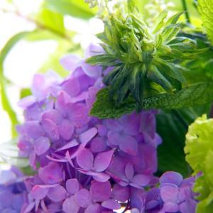 6月に寄せて * 5月の花贈り便 *