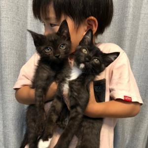 子猫祭りINつるにゃん参加猫①