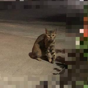 前足を怪我した猫