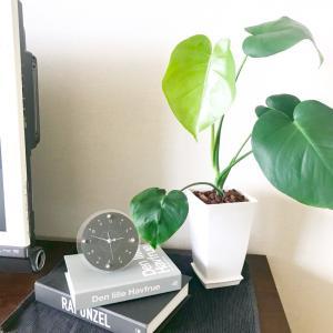 100円で高見え⁉︎観葉植物をグレードアップさせる