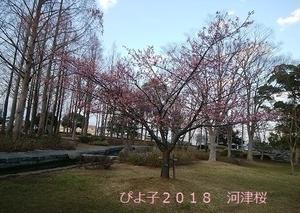 春ですね♡