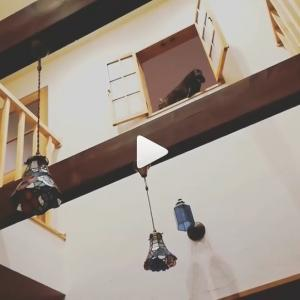 梁から室内窓へジャンプで移動!と、多頭飼いで大変なこと