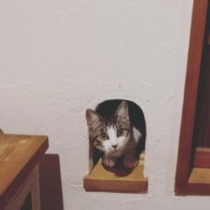 ひめちゃん、猫穴からコンニチハ