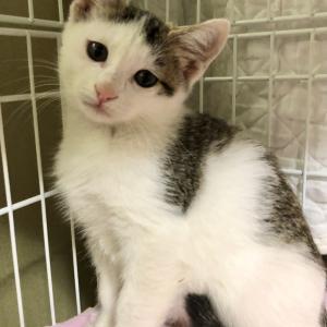 本日14時からにゃんクルー保護猫譲渡会、コロナ対応して開催します!