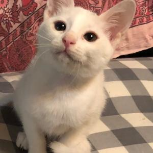 9/19(日)にゃんクルー譲渡会に参加予定の猫さん-その2