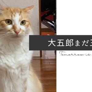 大五郎さん生誕3周年感謝祭