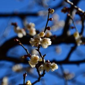 春を見つけに