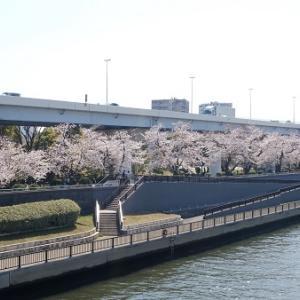隅田川サクラと浅草散歩