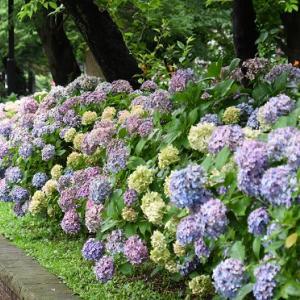 上野公園花撮影散歩