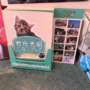 ベローチェの2020年2月の猫ファイルキャンペーン