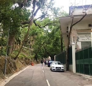 香港トレイル・セクション2 薄扶林貯水池から貝璐道の5キロを歩く☆Hong Kong Trail Sextion 2 From Pok Fu Lam Reservoir to Peel Rise