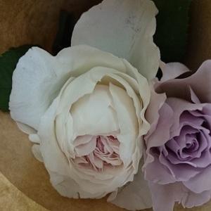薔薇の香りとメッセージに感謝の気持ちを添えて