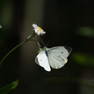 花が咲き!蝶が飛ぶ!part2