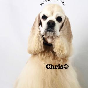 クリスくん!
