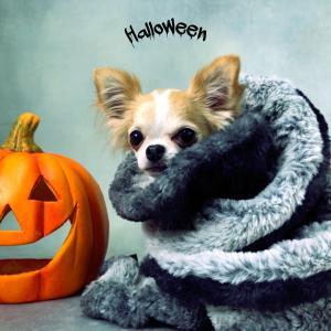 Halloween お写真募集