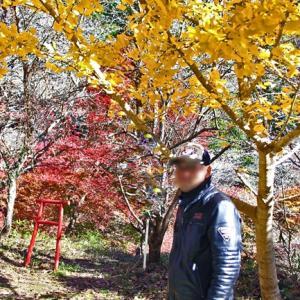 【おかわりツーリング】四季桜を再び 2