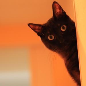 ネコの腎臓病用サプリ、活性炭ってどんなもの?