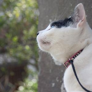 スペシフィック猫用 FKD ドライは腎臓にいいの?