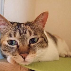 腎不全のネコのサプリ:カリナール