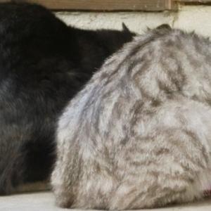 ヒルズ 猫用 k/d ドライ 科学的に検証された腎臓病療法食
