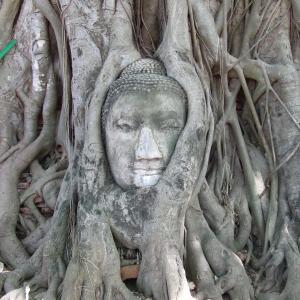 タイ バンコク&サムイ島旅3日目アユタヤ遺跡と片道クルーズ ٩(๑❛ᴗ❛๑)۶