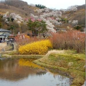 平成最後の花見 第2週(5)花見山(その1)入口にたどり着く前から
