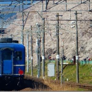 平成最後の花見 第2週(1)白石川一目千本桜(その1)