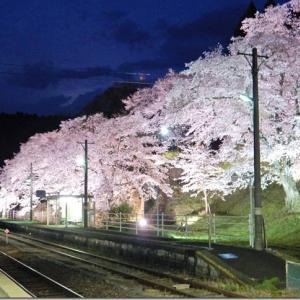平成最後の花見 第3週(1)舞木の夜桜