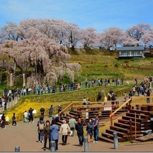 平成最後の花見 第3週(2)三春滝桜