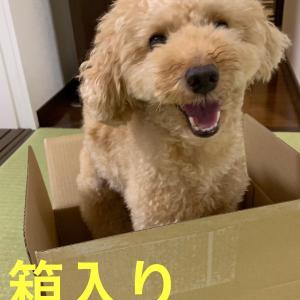 箱入りオレ