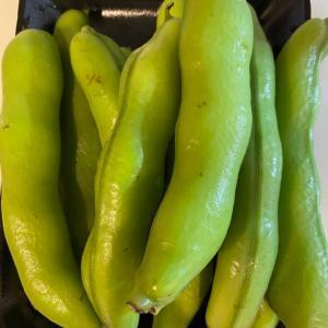 夏野菜 1番美味しい空豆レシピ