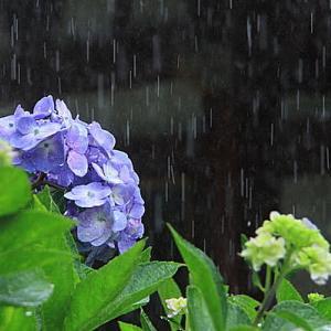梅雨とアンティークウォッチ / 南雲時計店【公式】ブログ