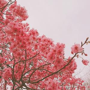 お花見に行って花粉症の症状から自分の体質を知ってみる。