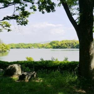 山田池公園のナニワイバラ