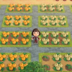 【あつ森】初かぼちゃと流星群