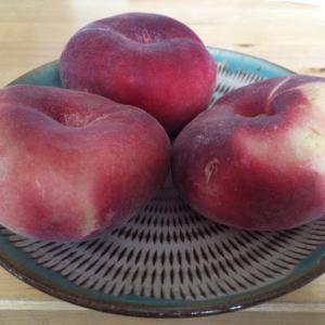 孫悟空が食べ尽してしまうくらい美味しい!平べったい桃Plattpfirsch!
