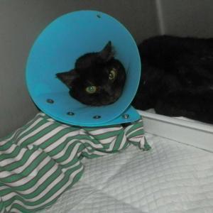 公園猫さん…★入院&通院を…★ぼ 僕の兄たんでしゅからにゃあ…