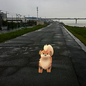 【ポケモンgo】俺氏の行く手に番犬の如く立ち塞がるガーディwww
