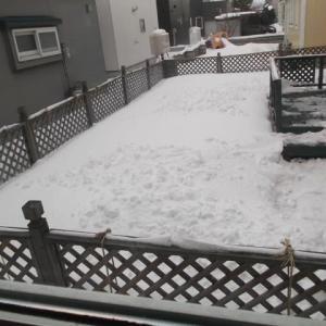 雪が降らないのは嬉しいんだけど