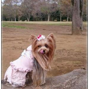 ♪公園散歩で出会えた~♪
