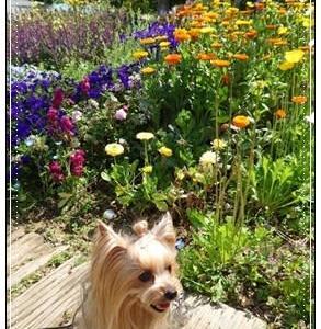 ♪小花のお庭散歩♪